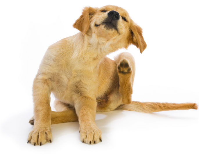 How to Care for Dogs & Cats with Allergies