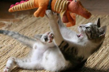 Feline Frenzy-Why cats need interactive play toys