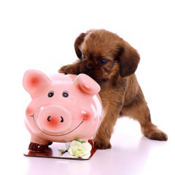 The True Cost of Feeding a High Quality Pet Diet: It May Surprise You!